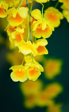 Plants, Backgrounds, Wallpapers, World, Flowers, Display, Wallpaper, Plant, Backdrops