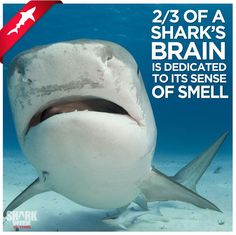 Shark Facts ~ Good to Know! #GoEco AND #volunteerabroad