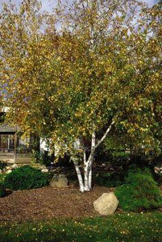 Pergola In Front Yard Pergola Ideas For Patio, Deck With Pergola, Diy Pergola, Pergola Carport, Pergola Canopy, Pergola Shade, Terraced Landscaping, Outdoor Landscaping, Front Yard Landscaping