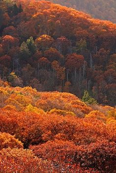 ✯ Shenandoah, Virginia beautiful to see the autumn colours motherlylove.co.uk