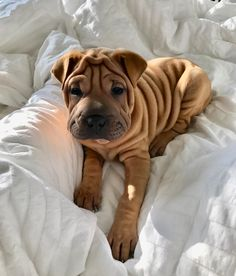Dog And Puppies Small .Dog And Puppies Small Cute Dogs And Puppies, Baby Dogs, I Love Dogs, Doggies, Puppies Tips, Baby Puppies, Cute Little Animals, Cute Funny Animals, Funny Dogs