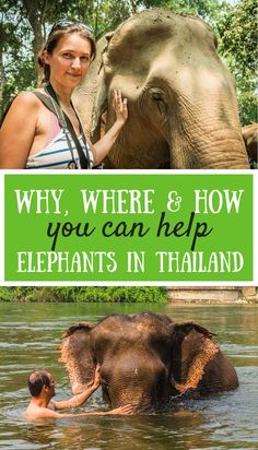 Travelling to Thailand and thinking of joining an elephant trek or having an elephant ride? Take a look at how you can really help elephants in Thailand.