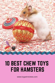 Locking your hamster in a cage just does not cut him. If you buy the best chewing toy for hamsters, it stays entertained and active throughout the day. health tips, healthy pet, animal products, puppy Diy Hamster House, Hamster Life, Baby Hamster, Hamster Food, Hamster Habitat, Hamster Stuff, Hamster Breeds, Hamster Accessories, Hamster Bedding