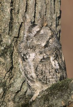 camouflage in nature - Google Search