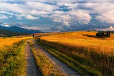 Golden hills - null