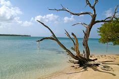 No Man's Land, Tobago, via Flickr.