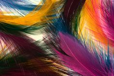 colorful feathers!
