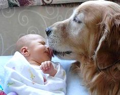 Learn how to introduce your new baby to your old dog over at Dogster. Photo via celiasue.files.wordpress.com