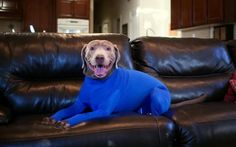 Dogs Are Wearing Leotards Now, And It Solves The WORST Problem. - http://www.lifebuzz.com/leotards/