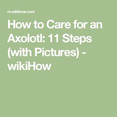 How to Care for an Axolotl: 11 Steps (with Pictures) - wikiHow