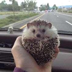 driving♪