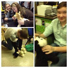 Small animal first aid using stuffed animals. Ledford FFA - www.OneLessThing.net