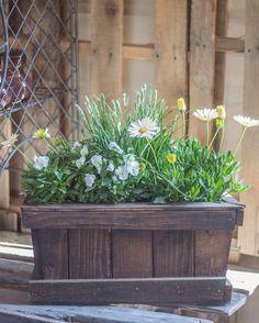 Morning light ✨⠀ #rogersgardens #bringingbeautyintoyourhomeandgarden⠀ #morning #fridayflowers #fall #containergardening #gardening #plantvibes #green #nature #instagood #love