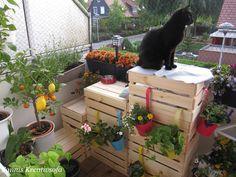 Sannis Kreativsofa : Die Katzentreppe mit vertikalen Garten