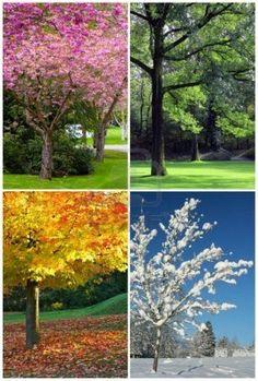 de 4 seizoenen in beeld