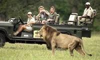 african safari - Google Search
