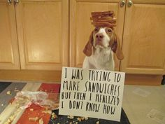 May(m)o – Sandwich Maker - Maymo the lemon beagle fails at making everyone a nice lunch of sandwiches. Fortunately, Maymo is able to utilize the half loaf of bread he didn't destroy by turning it into a very fashionable bread hat.  Via:  dogshaming.com