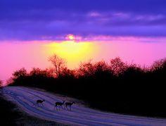 Skukuza Sunrise ~ main camp in the Kruger National Park ~ Mpumalanga, South Africa
