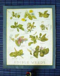 Edible weeds, Cooks Illustrated. Photo by mollyjolly on Flickr.