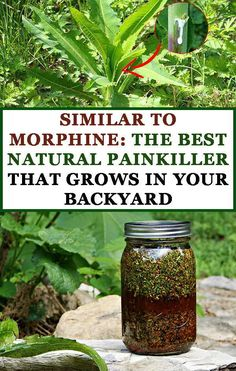 Similar to Morphine The Best Natural Painkiller that Grows in Your Backyard Pinterest Natural Healing, Medical, Medical Doctor, Medicine, Med School, Medical Technology