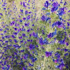 Nel blu dipinto di blu giugno erbespontanee flora appennino appenninotoscoemilianohellip