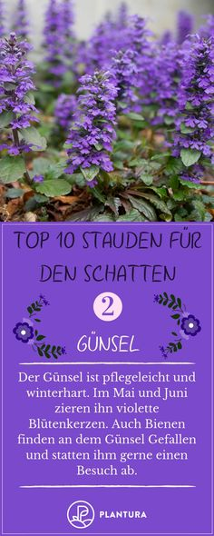Stauden für den Schatten: Unsere Top 10 Perennials for the Shadow: Our Top There is always this one dark location, where all the plants come in. We can help and imagine ten perennials growing in your shade garden. Perennials Fabric, Full Sun Perennials, Shade Perennials, Fall Plants, Shade Plants, Garden Plants, Outdoor Plants, Outdoor Gardens, Herb Garden Design
