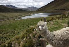 Puno, capital folclórica de Perú