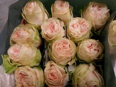 #Rose #GardenSpirit; Availalbe at www.barendsen.nl