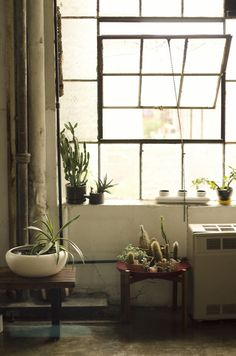 windows, plants