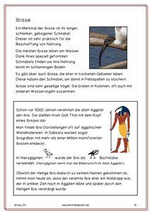 Waldrapp und Ibisse (free)