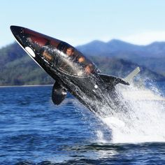 Killer Whale Submarine with passenger view