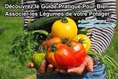 Une des meilleures façons d'assurer la santé et la vitalité de vos légumes et aromatiques est de les entourer de plantes qui leur sont complémentaires.  Découvrez l'astuce ici : http://www.comment-economiser.fr/guide-pour-bien-associer-les-legumes-du-potager.html?utm_content=buffer589e6&utm_medium=social&utm_source=pinterest.com&utm_campaign=buffer