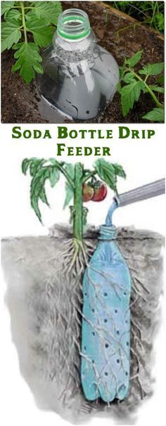 Soda Bottle Drip Feeder