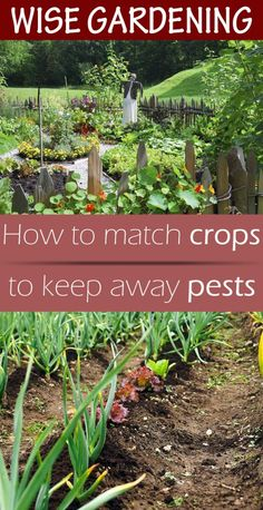 How to match crops to keep away pests.