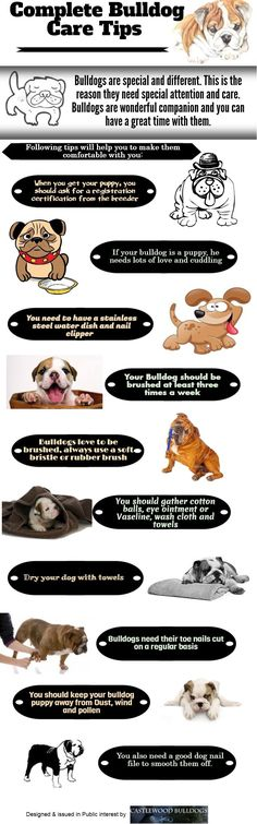 Bulldog care tips