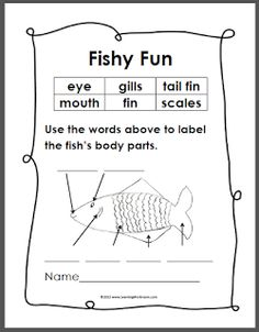 labelled diagram of a tilapia fish featherlite trailer wiring basic fins labeled lesson pinterest learning ideas grades k 8 simple anatomy