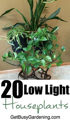 """Low Light Indoor Plants That Are Easy To Grow Most houses don't get a ton of direct sunlight, and many rooms don't get any at all. If you've ever wondered: """"What low light houseplants can I grow in my indoor gardening space?"""" Then this list is for you Organic Gardening, Gardening Tips, Indoor Gardening, Beginners Gardening, Succulent Gardening, Succulent Planters, Urban Gardening, Hydroponic Gardening, Urban Farming"""