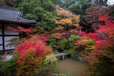 Japanese garden - Japanese garden is beautiful. In particular, the fall of the garden is exceptional. Red or green, a colorful nature. It is a space that is healed.