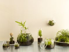 Top 8 Terrarium Plants - Sunset Magazine