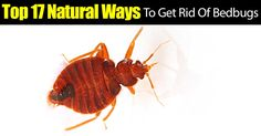 You've heard the old rhyme about sleeping tight and do not let the bedbugs bite, but anyone who has ever suffered an invasion of the little bloodsuckers knows it's no laughing matter. If you've had the bad luck to find your bedding infested, consider these 17 natural and... #fal #spr #sum