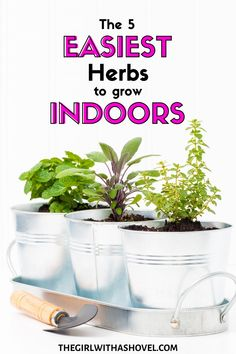 Don't make your indoor herb garden difficult! Start with these easy herbs that will give you success and confidence in your culinary herb growing skills! Indoor Herb Garden | Easy Herbs to Grow | Indoor Garden | Herbs that are Easy | Beginner Herbs | Indoor Pizza Garden | Pizza Garden | Windowsill Herb Garden | How to Grow Herbs | Garden Pizza, Herb Garden, Indoor Garden, Indoor Plants, Easy Herbs To Grow, Culinary Herb, Growing Herbs Indoors, Plant Decor, Houseplants