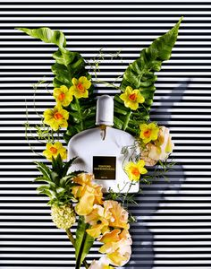 TOM FORD: Still Life photograph by Claire Benoist