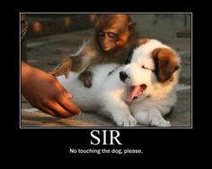 My good sir...