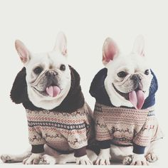 ', French Bulldogs, via Batpig & Me Tumble It Puppies And Kitties, Cute Puppies, Cute Dogs, Doggies, Dog Love, Puppy Love, Animals And Pets, Cute Animals, Bulldog Rescue