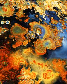 Cosmos in rust 1 - fine art digital photographic print