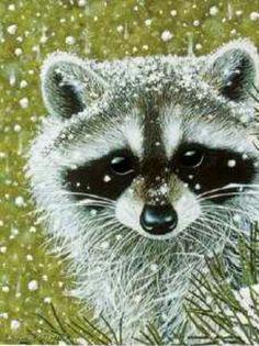 .snowy raccoon Raccoon Drawing, Raccoon Art, Cute Raccoon, Racoon, Cute Cartoon Animals, Baby Animals, Cute Animals, Panda Decorations, Unique Animals