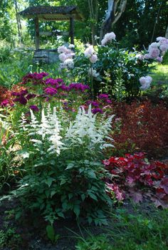 by Kristi Everst like the colors do these plants do well in less than 6hrs sun though