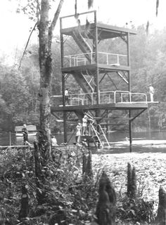 Florida Memory - Diving tower at Wakulla Springs I remember diving off the top level in the Daytona Beach Florida, Florida Girl, Visit Florida, Vintage Florida, Old Florida, Miami Florida, Florida Trees, Florida Springs, Tallahassee Florida