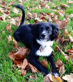Cute Pomeranian mix dogs are the favorite choice of pets, and there are so many of these mixed breeds to choose so with this article, your search will be a lot easier. Cocker Spaniel Mix, Spaniel Puppies, Cute Pomeranian, Save A Dog, Dog Mixes, Happy Dogs, Dog Toys, I Love Dogs, Best Dogs