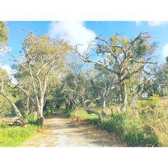 【nowcallmeuna】さんのInstagramをピンしています。 《光是公園的湖 就比大安森林公園還大😧 #傲笑年 #散步 #澳洲 #旅行 #耍廢 #春天 #公園 #湖 #狂 #2016 #youth #travel #wa #life #4fun #walking #sunshine #spring #park #forest #lake #春 #🌞 #若者 #オーストラリア #旅 #散歩 #笑 #公園 #湖 #森 #晴れ》